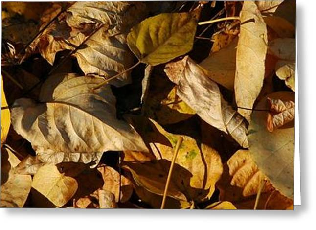 Autum Greeting Cards - Fall Leaves Greeting Card by Bill Kellett