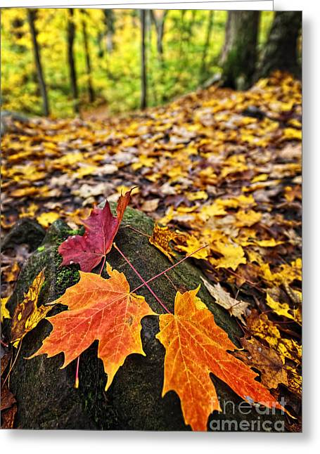 Bright Leaves Greeting Cards - Fall leaves in forest Greeting Card by Elena Elisseeva