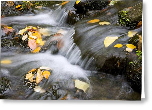 Person Of Color Greeting Cards - Fall Leaves In Rushing Water Greeting Card by Craig Tuttle