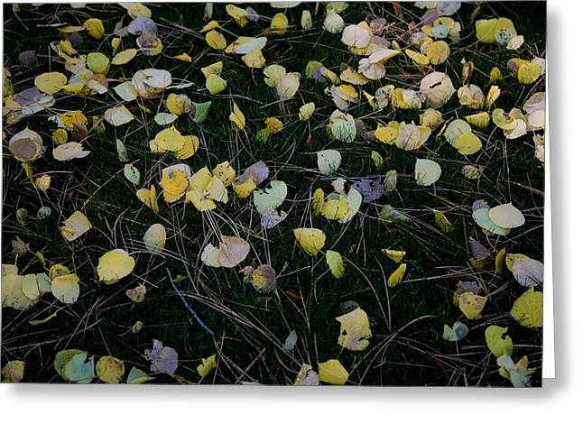 Fall Grass Greeting Cards - Fall Leaves Greeting Card by John Wong