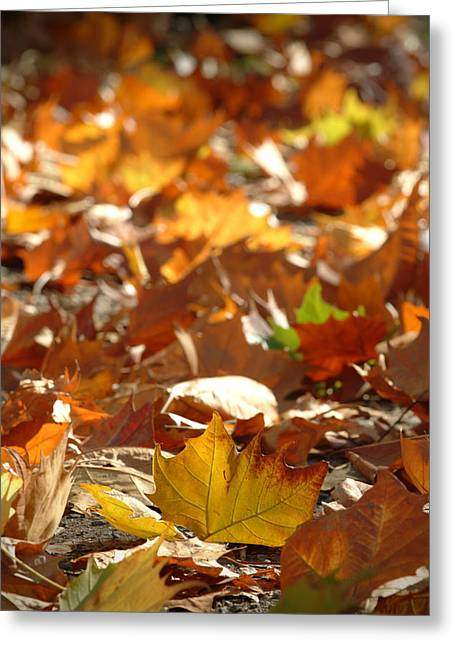 Fallen Leaf Greeting Cards - Fall Leaves Greeting Card by Ron Schwager