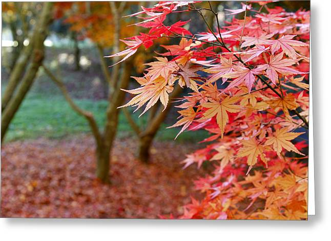 Autumn Photographs Greeting Cards - Fall Greeting Card by Les Cunliffe