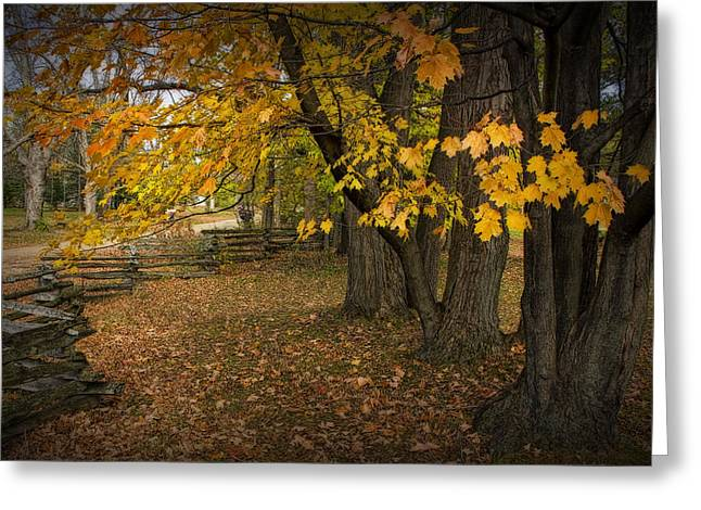 Fall Maple Leaf Trees With Split Rail Fence Greeting Card by Randall Nyhof