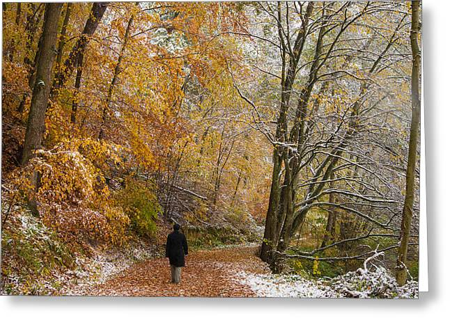 Dialogue Greeting Cards - Fall meets winter - walking in the forest Greeting Card by Matthias Hauser