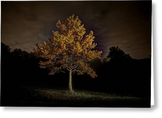 Fall Tree Greeting Card by Nicholas  Grunas
