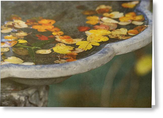 Bird Bath Greeting Cards - Fall Offering Greeting Card by Rebecca Cozart
