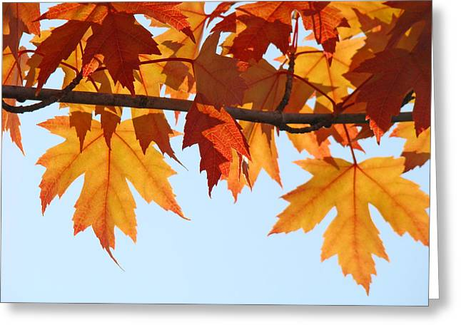 Autumn Art Greeting Cards - Fall Orange Tree Leaves art Prints Autumn Nature Greeting Card by Baslee Troutman