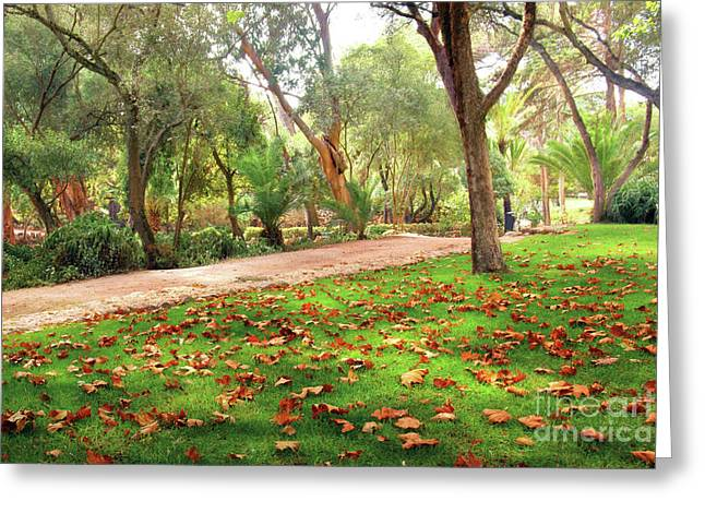 Golden Green Background Greeting Cards - Fall Park Greeting Card by Carlos Caetano