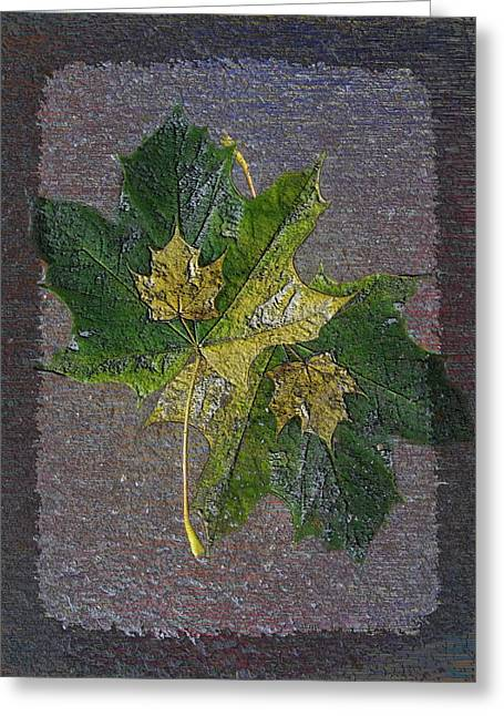 Jagged Border Greeting Cards - Fall Quartet Greeting Card by Tim Allen