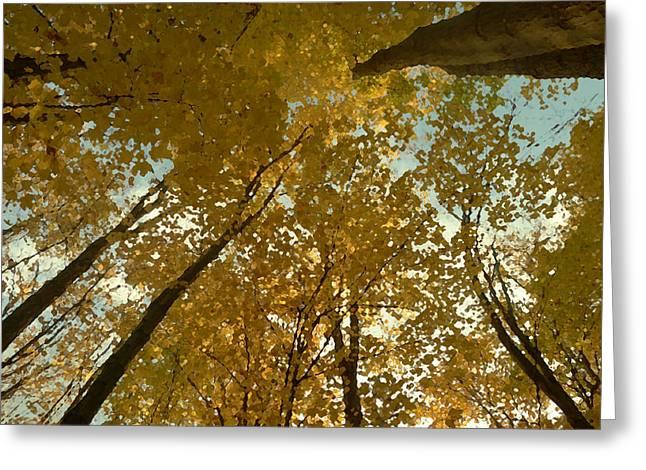 Fall Scene Greeting Card by Tom Bush IV