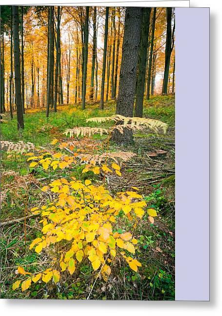 Fall Scenery Greeting Card by Maciej Markiewicz