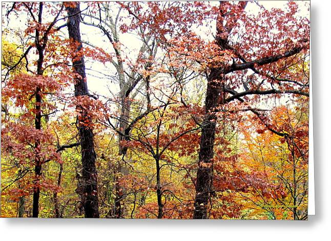 Fall Splatter Greeting Card by Deborah  Crew-Johnson