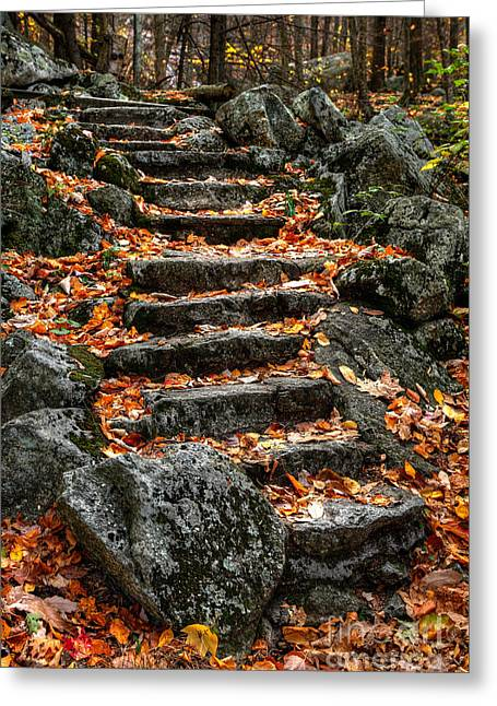 Stepping Stones Greeting Cards - Fall Steps Greeting Card by Dan Carmichael