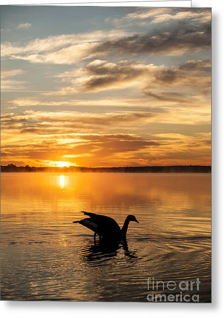 Geese Silhouette Greeting Cards - Fall Sunrise Greeting Card by Iris Greenwell
