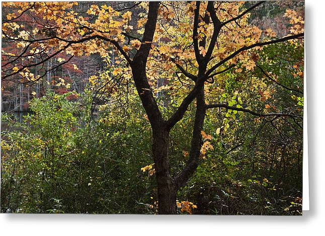 Beavers Bend Park Greeting Cards - Fall Touch Greeting Card by Iris Greenwell
