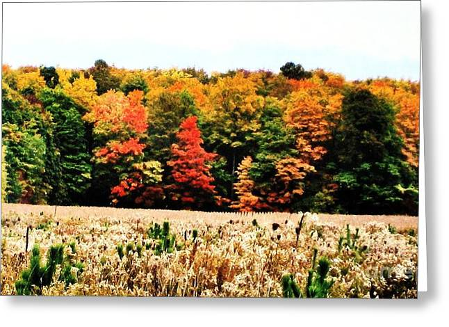 Fall Photos Digital Art Greeting Cards - Fall Tree Line and Field Greeting Card by Marsha Heiken