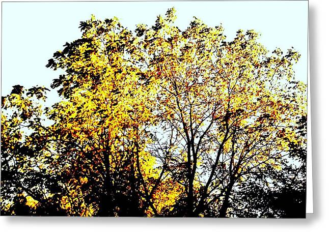 Shadows Posters Greeting Cards - Fall Tree Top Greeting Card by Marsha Heiken