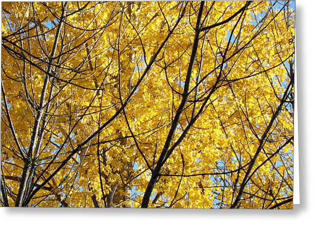 Fall Trees art prints Yellow Autumn Leaves Greeting Card by Baslee Troutman Fine Art Photography