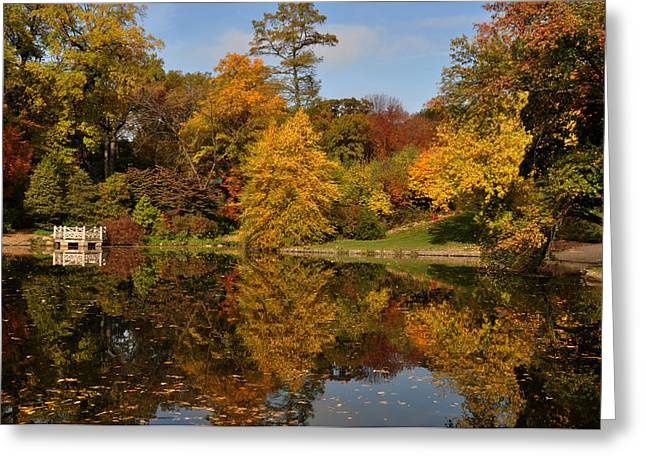 Prospects Greeting Cards - Fall trees in mirror image Greeting Card by Diane Lent