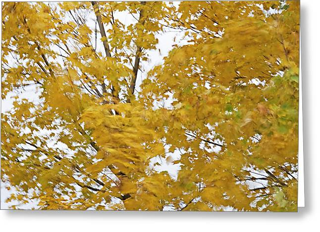 Windswept Mixed Media Greeting Cards - Fall Wind 2 Greeting Card by Steve Ohlsen