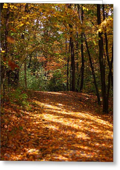 Kevin Schrader Greeting Cards - Fall Woods Greeting Card by Kevin Schrader