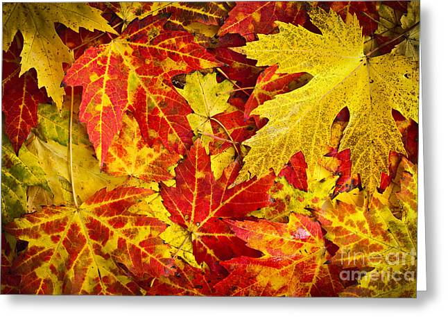 Leafs Greeting Cards - Fallen autumn maple leaves  Greeting Card by Elena Elisseeva