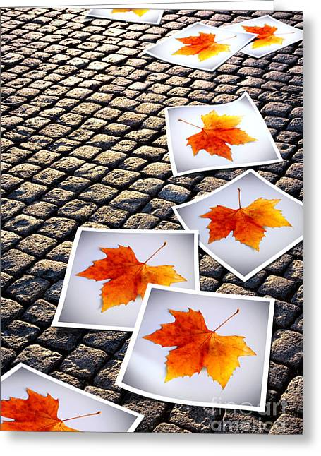 Roadway Photographs Greeting Cards - Fallen Autumn  prints Greeting Card by Carlos Caetano