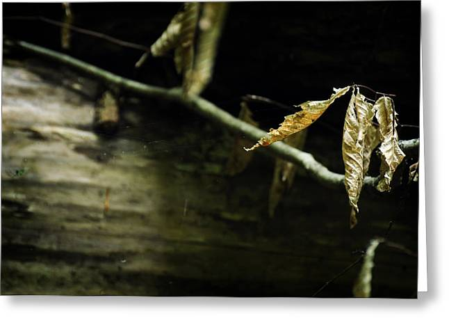 Decay Educational Greeting Cards - Fallen Beech Greeting Card by Rebecca Sherman