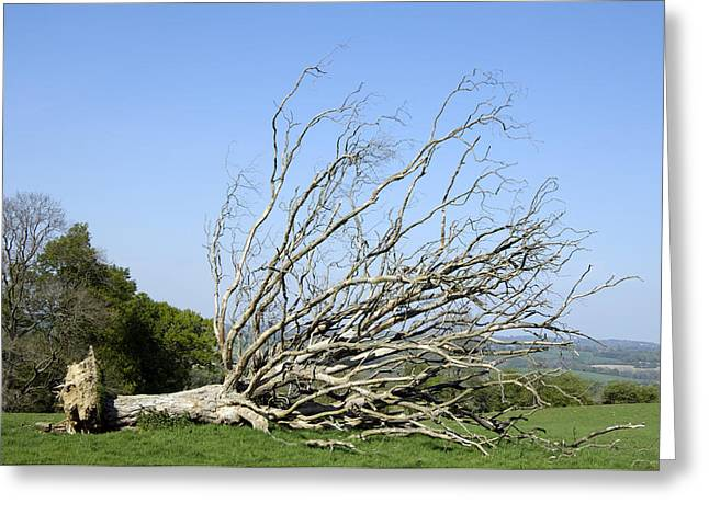 Uproot Greeting Cards - Fallen Dead Tree Greeting Card by Johnny Greig