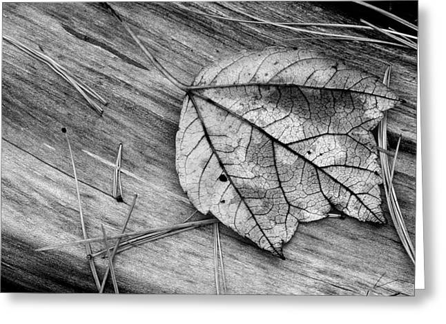 Pine Needles Greeting Cards - Fallen Leaf Greeting Card by Tony Ramos