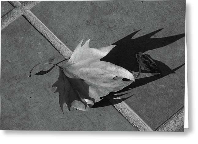 Fallen Leaf Drawings Greeting Cards - Fallen Leaf Greeting Card by Yavor Kanchev
