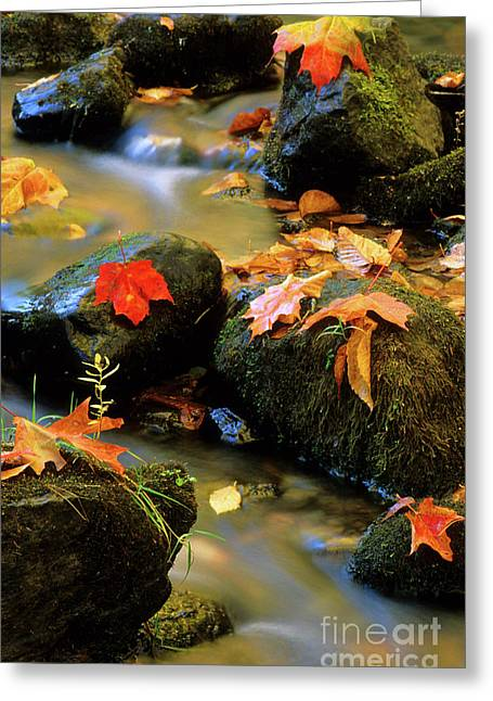 Nova Scotia Photographers Greeting Cards - Fallen Leaves Greeting Card by Bob Christopher