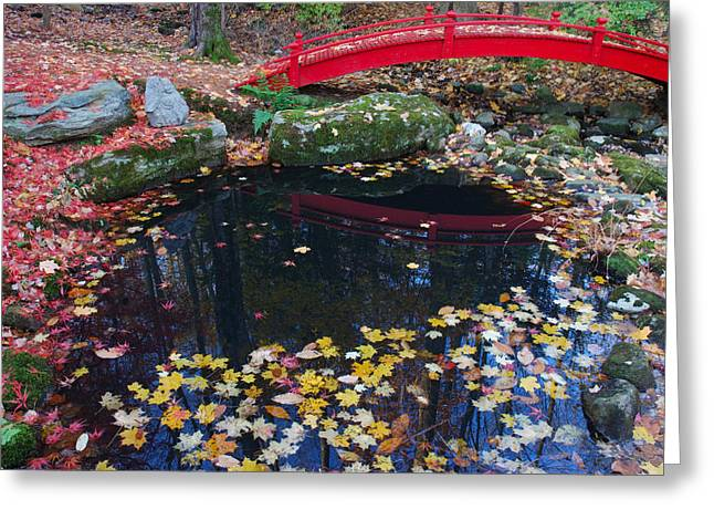 Fallen Leaves From Japanese Maples Greeting Card by Darlyne A. Murawski