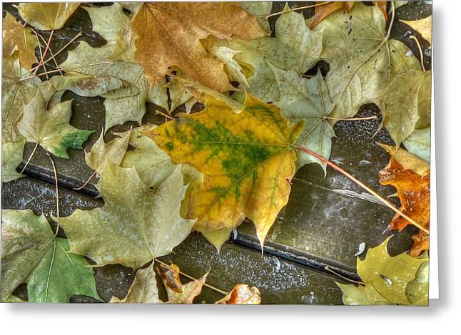 Fallen Leaves Greeting Card by Lisa Knechtel