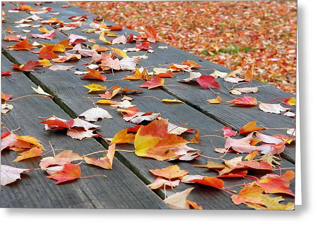Natural Realm Greeting Cards - Fallen Leaves Greeting Card by Lisa  Phillips