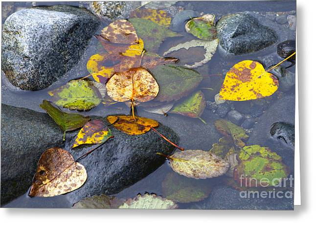 Stones In Water Greeting Cards - Fallen Leaves of Autumn Greeting Card by Sharon  Talson