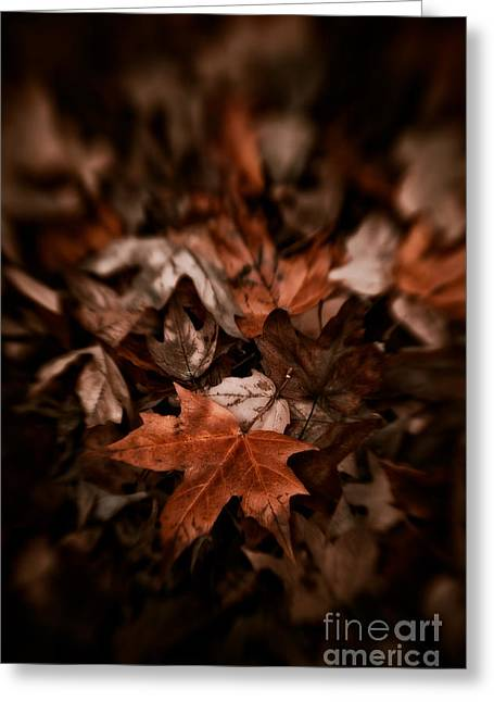 Van Dusen Botanical Garden Greeting Cards - Fallen Leaves Greeting Card by Venetta Archer