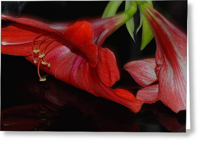 Bouquet Amaryllis Greeting Cards - Fallen Greeting Card by Lisa  DiFruscio