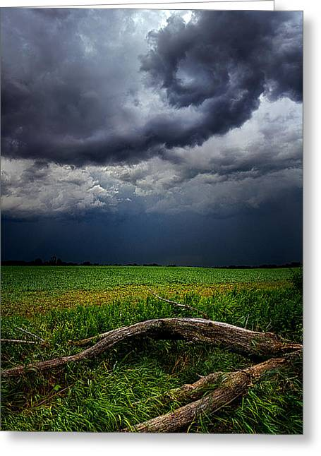 Red Photographs Greeting Cards - Fallen Greeting Card by Phil Koch