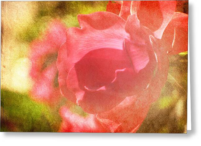 Rose Photos Greeting Cards - Falling In Love Greeting Card by Amy Tyler