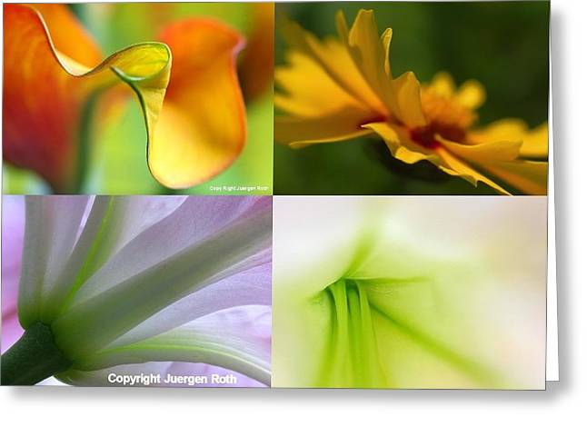 Floral Artwork Greeting Cards - Falling in love with ... Greeting Card by Juergen Roth
