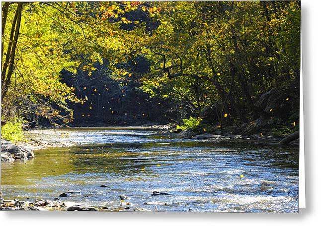 Stream Digital Greeting Cards - Falling Leaves Greeting Card by Bill Cannon