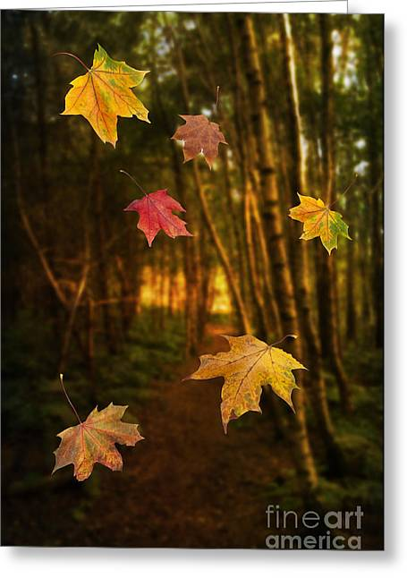 Autumn Photographs Greeting Cards - Falling Leaves Greeting Card by Amanda And Christopher Elwell