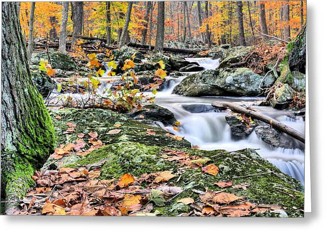 Falling Water Creek Greeting Cards - Falling Water Greeting Card by JC Findley