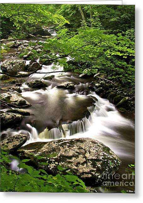 Great Smokey Mountains Greeting Cards - Falls at Tremont Great Smokey Mountains NP Greeting Card by Brian Stamm