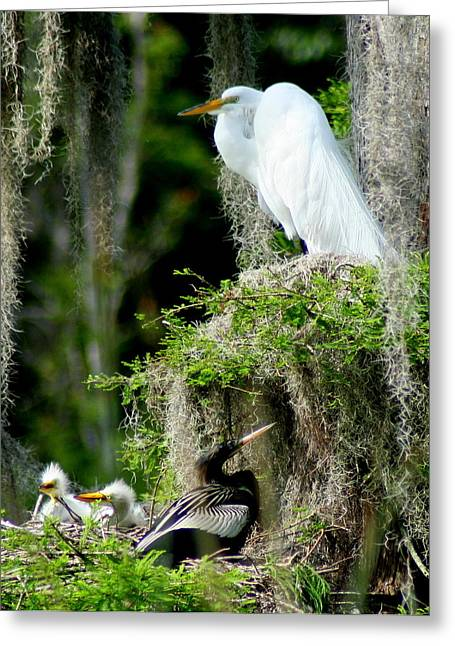 Snowy Egret Greeting Cards - Family and Friend Greeting Card by Lisa Scott