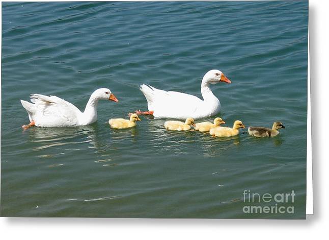 Family outing on the Lake Greeting Card by Ed Churchill