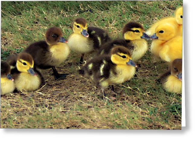 Ducklings Mixed Media Greeting Cards - Family Portrait Greeting Card by Angelina Vick