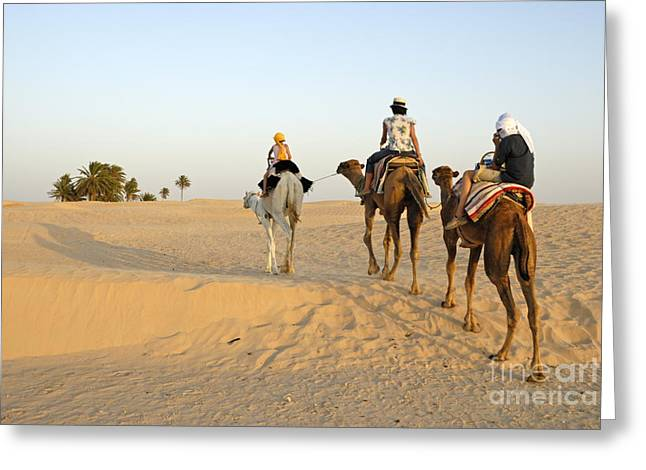 45-49 Years Greeting Cards - Family riding three camels in desert Greeting Card by Sami Sarkis