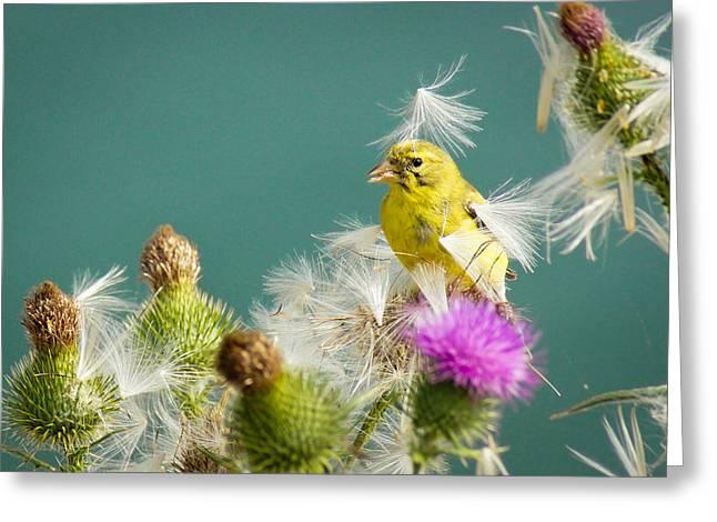 Feeding Birds Greeting Cards - Fan Dancer Greeting Card by Bill Pevlor